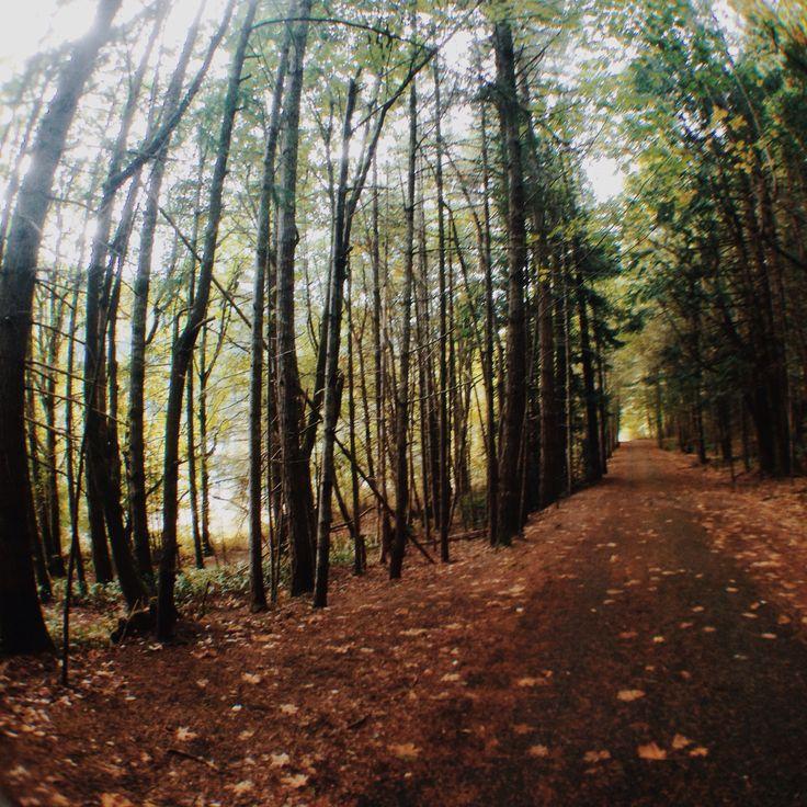 Gowland Tod, Victoria BC. #westcoast #bc #travel #hike #trees #fall