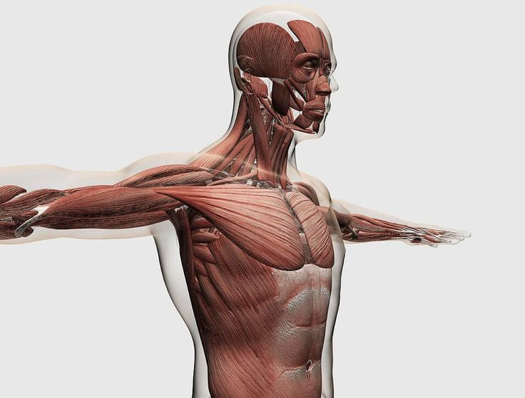 Причины, почему хрустят суставы и меры предосторожности