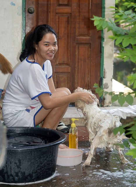 the foreign photographer - ฝรั่งถ่ - pretty woman washing dog | Flickr - Photo Sharing!