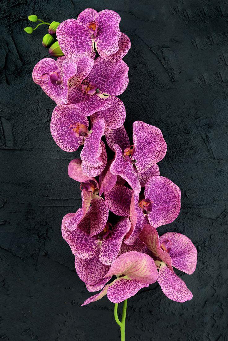Silks pothos desk top plant in pot amp reviews wayfair - Orchid Flower Purple 60in