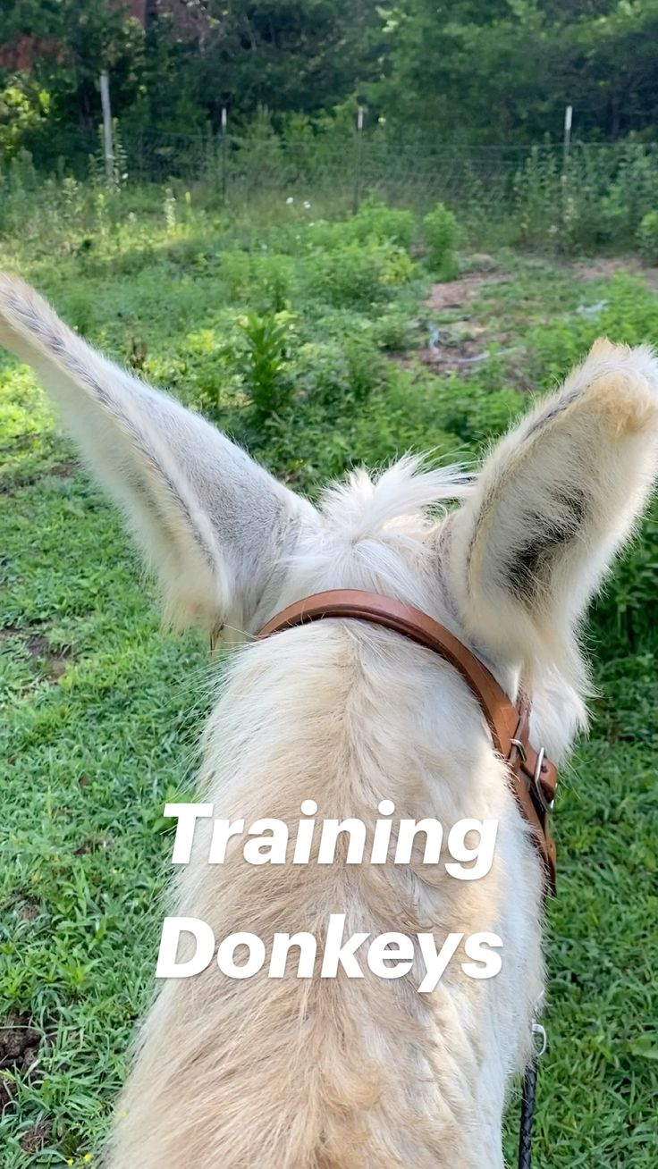 Best Small Dog Breeds, Best Small Dogs, Cute Horses, Beautiful Horses, Cute Funny Animals, Pretty Animals, Haflinger Horse, Baby Farm Animals, Horse Wallpaper