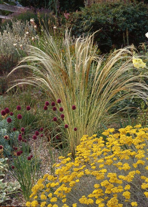 [Beth Chatto gravel garden - Beautiful!] ... the textures are so cool - love the contrast between the 'fountain' grass (concave) and the mount of yellow blooms (convex) ...