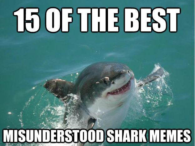 Best 25+ Misunderstood Shark Ideas On Pinterest