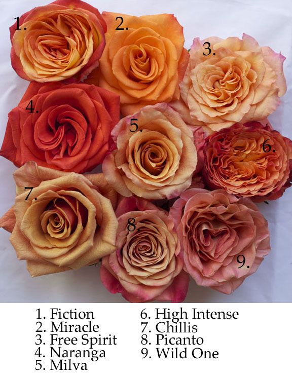 Orange rose varieties by Harvest Roses NYC