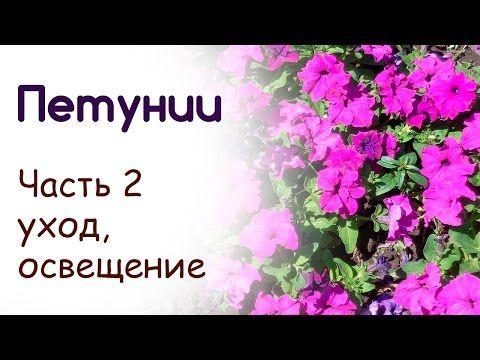 Посадка и выращивание петуний. Уход (часть 2) - YouTube