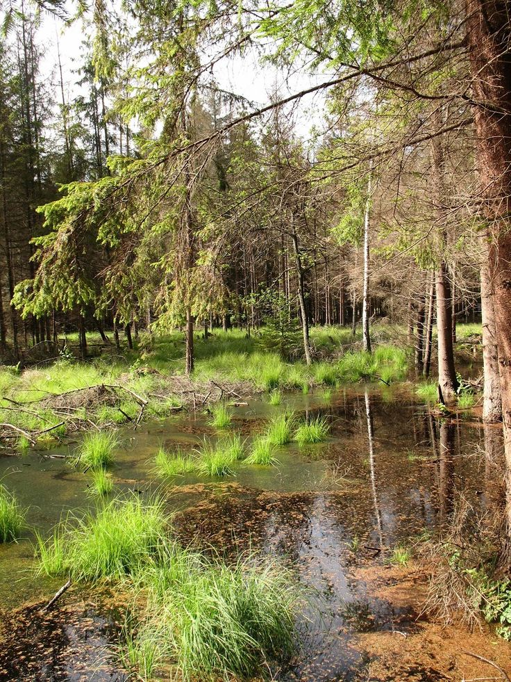 Lasy Sorkwickie.  www.it.mragowo.pl