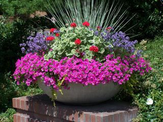 love the collar of purplePlants Can, Container Garden, Flower Pots, Be Better