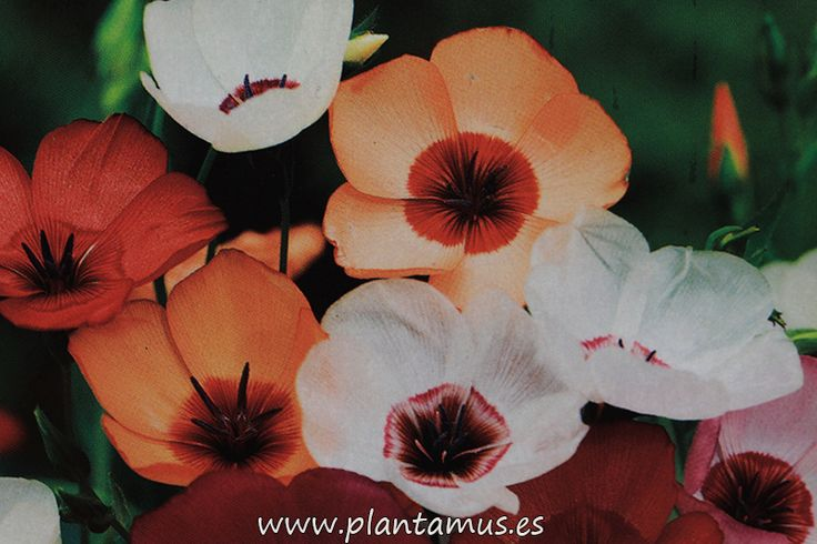 www.plantamus.es