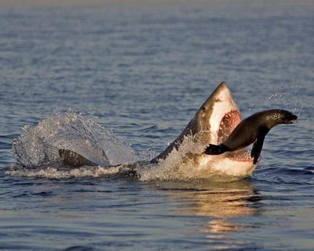 fotografias animales comiendo - Buscar con Google