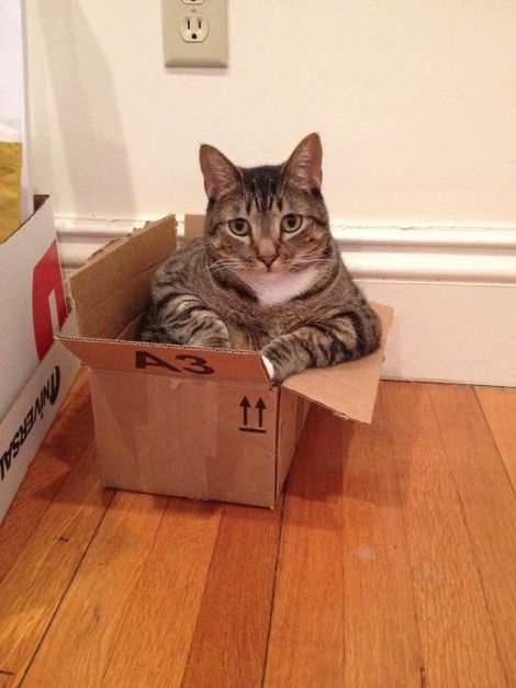 love cats in box my kitty doesn 39 t like boxes must be the only one lol cats pinterest. Black Bedroom Furniture Sets. Home Design Ideas