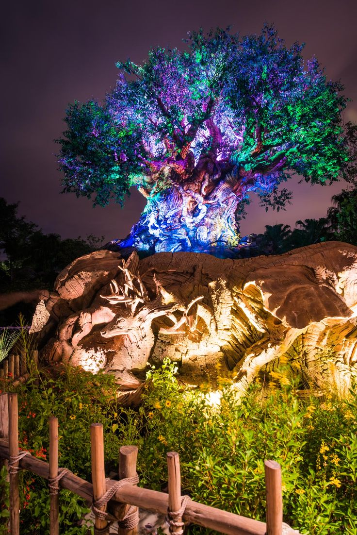 1 Day Itinerary For Walt Disney World's Animal Kingdom Park - The Bucket List Narratives