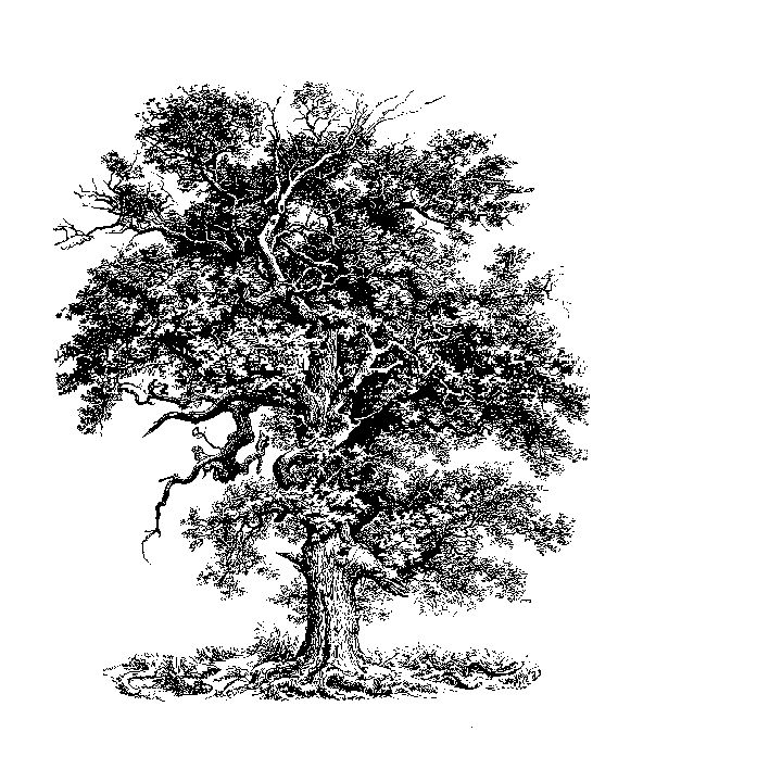 Tree Line Art Design : Oak tree drawing something like this to be coming out
