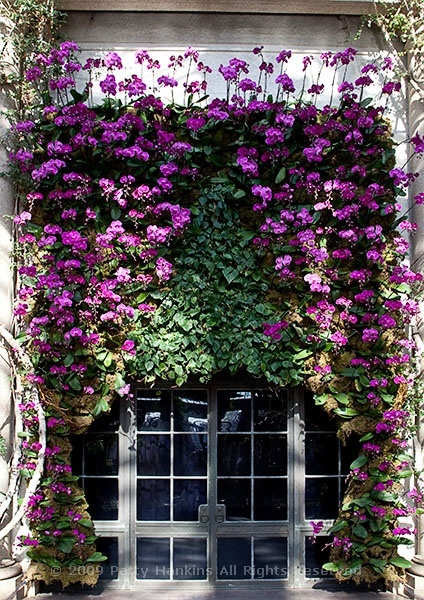 longwood_orchid_curtain