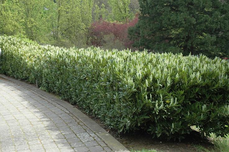 52 Best Yard Images On Pinterest Backyard Patio Garden Modern And Decks