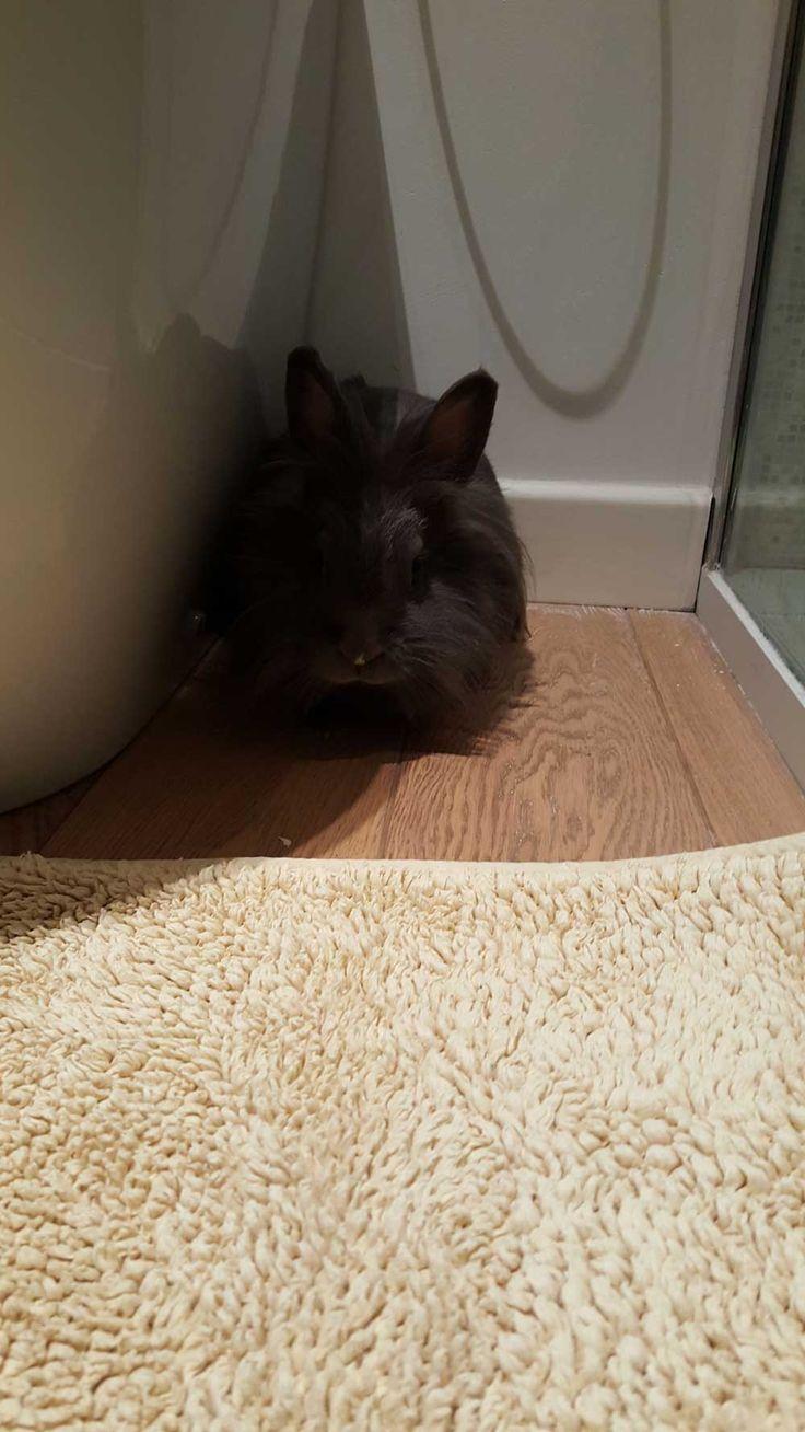 Pina!! #rabbitHeart #OnlyTheBrave #myBFFisanAmstaff #rabbit #coniglietta #NonsoloPlayboy #TheDarkSIDE