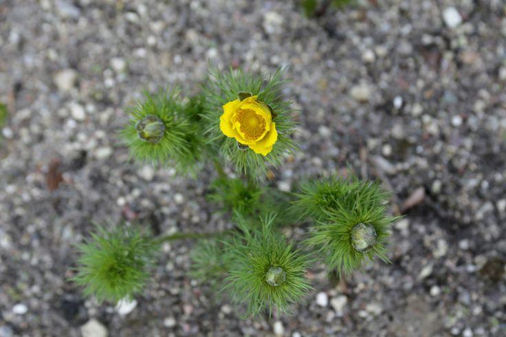 Ein Kurzurlaub im botanischen Garten von Hamburg • Blumen & Pflanzen Blog • 99Roots.com