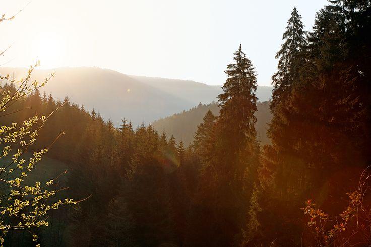 Sonnenaufgang im Schwarzwald...