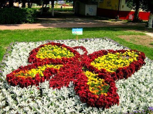 Дачные хитрости: Цветы. Часть 1. Однолетники. Самые популярные. | Rezumistka