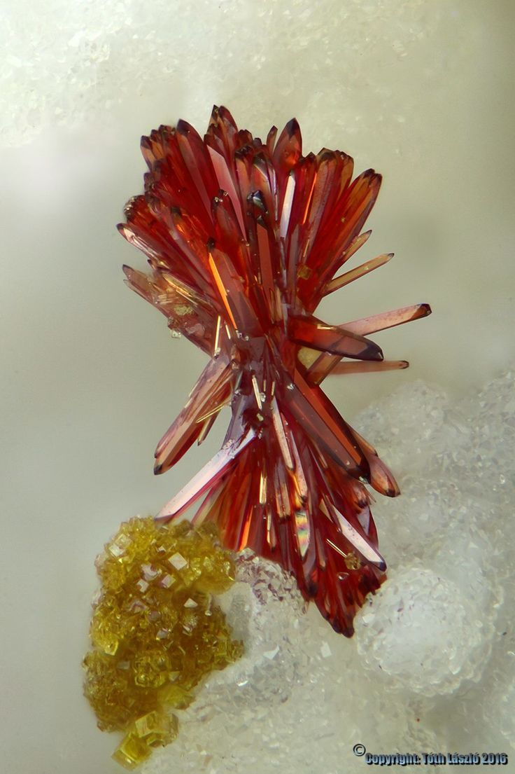 Carminite & segnitite Meleg Hill, Hungary 1 mm Photo : Toth Laszlo