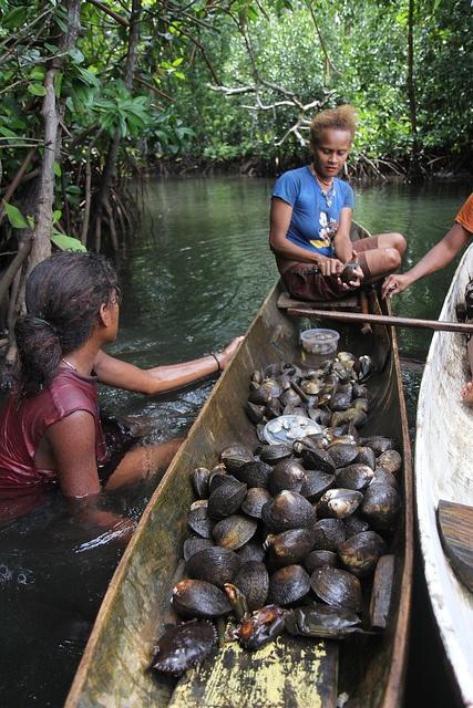 Women removing the shell from mangrove mudshells in Malaita, Solomon Islands (2012). Photo: Wade Fairley for WorldFish, via Flickr