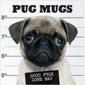 Google Image Result for http://www.pugs.co.uk/wp-content/uploads/2011/02/pug-image5-300x300.jpg