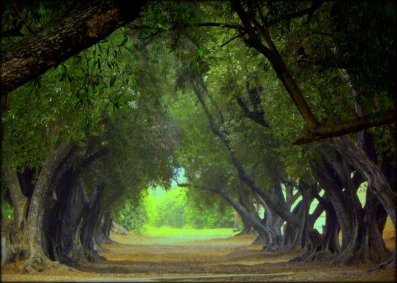 In A Canopy Of Trees, Julian, California - Limited Edition Signed and Numbered Photograph