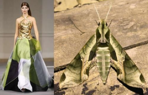 30 Colorful Fashion Trends Replicating The Insects