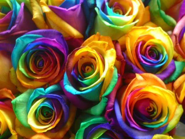Tie dyed roses rainbow explosion pinterest for Rainbow dyed roses
