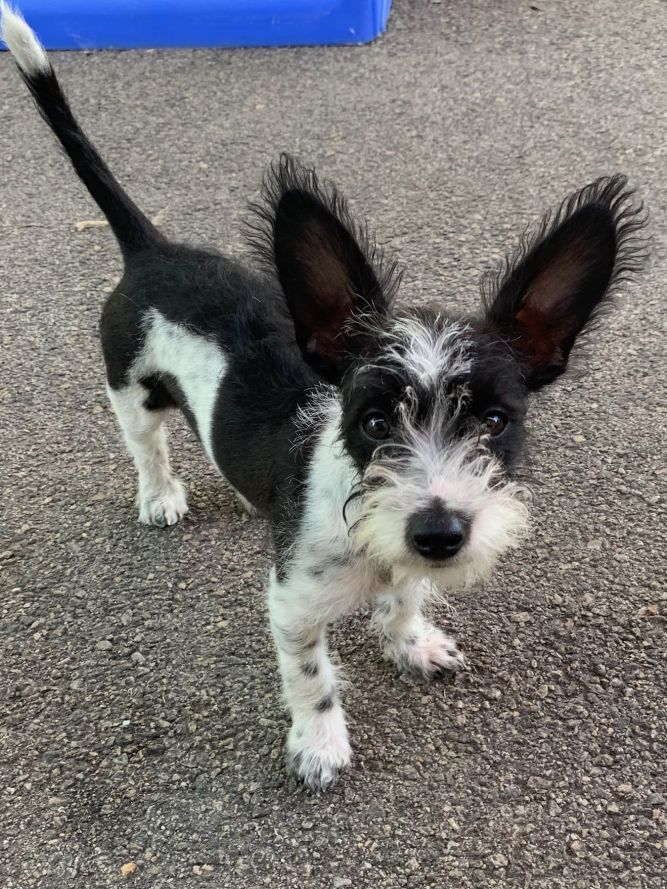 Adopt Mowhak On Terrier Mix Terrier Mix Dogs Man Dog