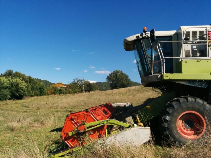 Harvesting flaxseed and lentils because staying at an Agriturismo means that you stay at a working farm www.vallenuova.it