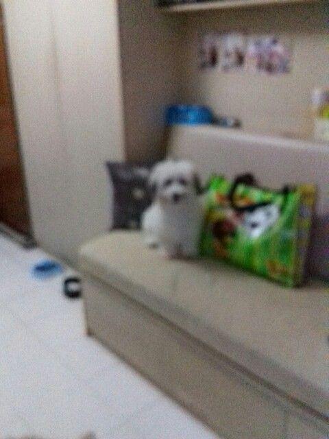 Candy my puppy