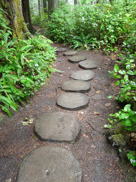 Tree Slice garden path: Tree Slice garden path
