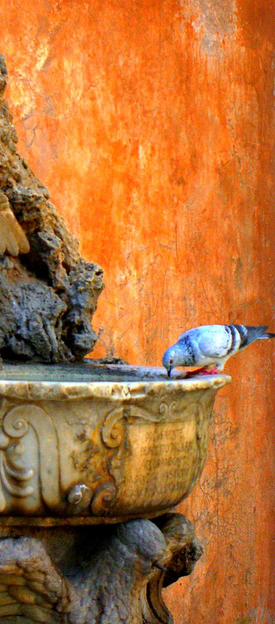 ~Rome, Italy. I love the texture of stucco walls. with a soft bird and weathered fountain to show it off. Doesn't it look a lot like the art journal pages being demonstrated lately?