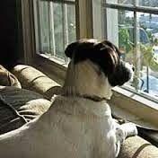 Salud Ambiental  con RADARCAN  : Tu perro sufre de ansiedad de separación: por Césa...