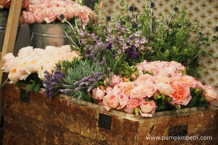 Rose of the Year at the RHS Hampton Court Palace Flower Show 2017 - Pumpkin Beth
