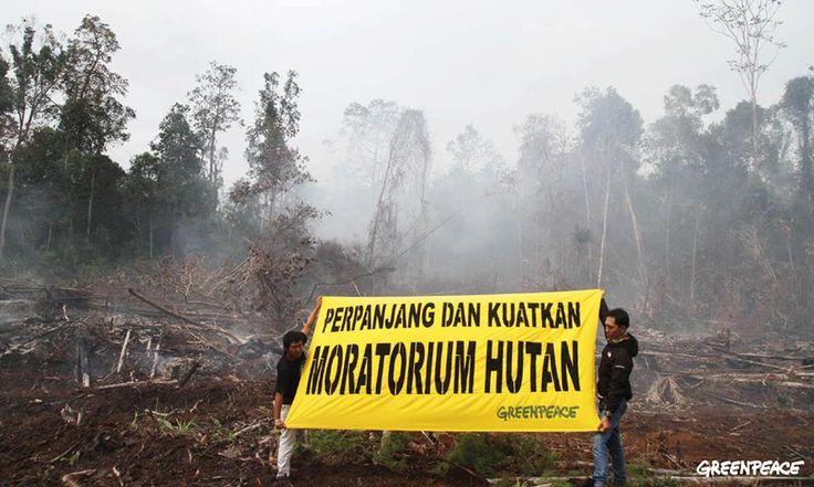 Desa Sumber Jaya, Kecamatan Siak Kecil, Kabupaten Bengkalis Propinsi Riau adalah termasuk wilayah yang dilindungi dalam Moratorium Hutan (jeda tebang). Tapi ketika kami datang ke sana hari Minggu tanggal 19 April lalu, nampaknya tidak seperti itu. Karena kebakaran hutan justru terjadi di wilayah yang mustinya dilindungi kebijakan Moratorium Hutan.