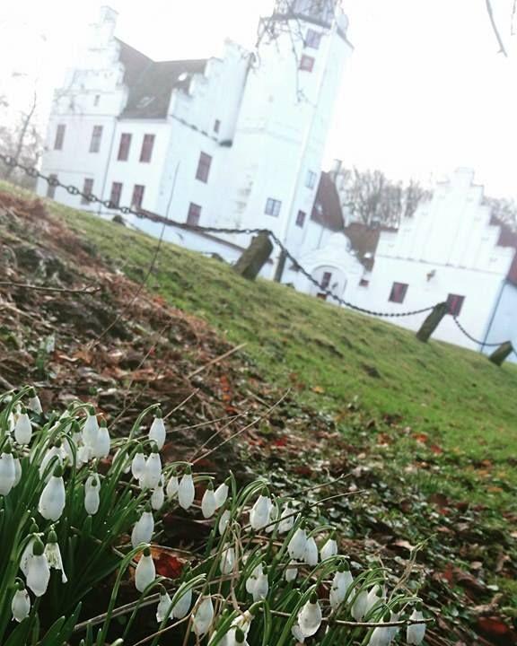 Det begynder at ligne forår på slottet med vintergækker rundt omkring