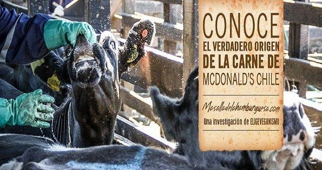 """McDonalds sorprendido haciendo publicidad engañosa en campaña """"Más allá de la cocina"""" - VeoVerde"""