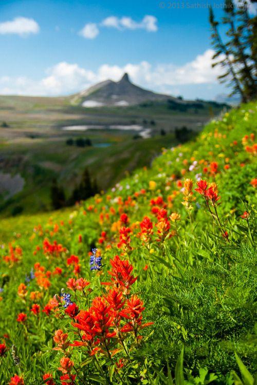 mistymorningme:  Teton Crest Wildflowers by satosphereIt was...