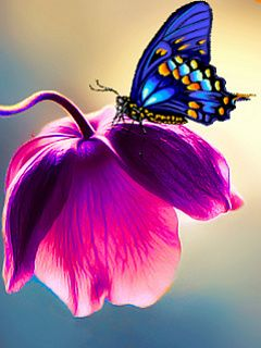 Blue butterfly on a flower
