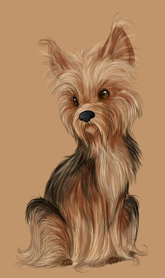 King - Yorkshire Terrier by ~DarkuAngel on deviantART