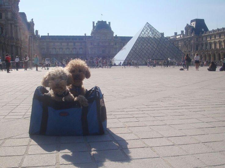Louvre, Paris - Giugno 2015