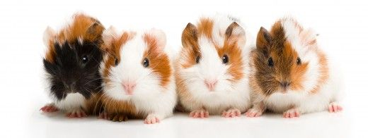 Cute, Funny Pig Names?! :)? | Yahoo Answers