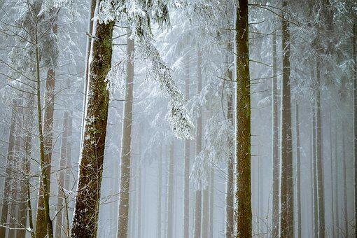 صور شجر أشجار غابات منوعة للكتابة عليها خلفيات رمزيات صورة 86 In 2021 Winter Forest Lake George Summer Vacation Spots