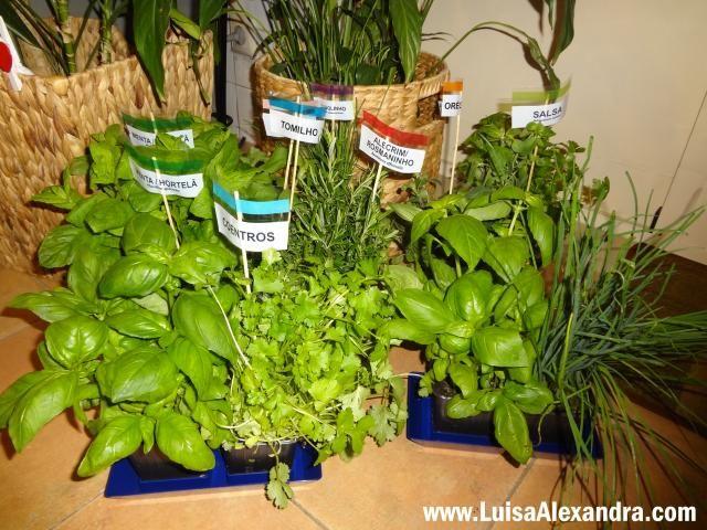 Aromaticas Vivas photo DSC07600.jpg