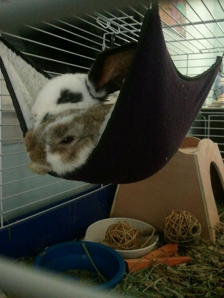 baby bunnies in a hammock. cuteness overload [any hammock that I would install would be eaten in moments, despite if he liked going inside]