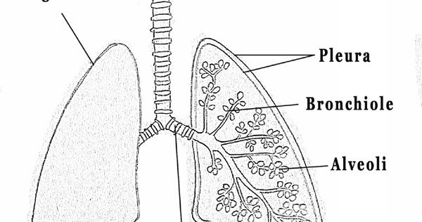 Step By Step Tutorials On Drawing Biology Diagrams Biology Diagrams Drawings Diagram