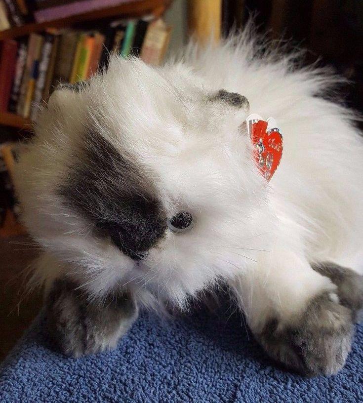 "TY CLASSIC ANGEL HIMALAYAN WHITE CAT 20TH ANNIVERSARY SOFT PLUSH STUFFED TOY 17"" | Toys & Games, Beanies, Ty Plush | eBay!"