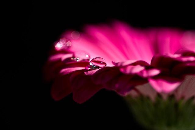 simbolo de las flores