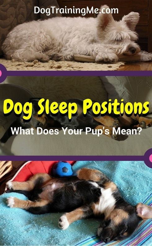 Do you want to know what your dog's sleep position means? Does your dog sleep in a ball, or on their back, or flat out like Superman? Find out what these dog sleep positions mean in our article!